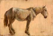 study of a grey horse